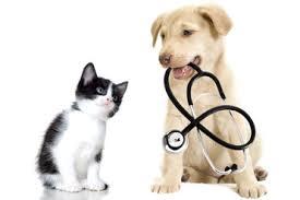 Djurförsäkringar